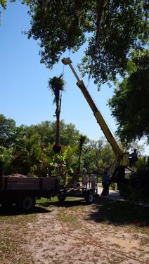 Leilani Tree & Land Services
